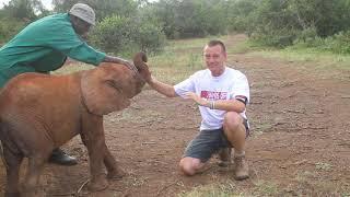 お話の途中ですが遊ぼー!と、撮影の邪魔をして来るアフリカゾウの赤ちゃん