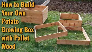 Growing Potatoes In Pallet Wood Boxes