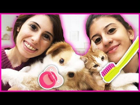 Köpeğime Ve Kedime Bebek Gibi Baktım Dila Kent
