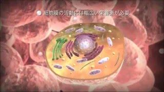 細胞の世界