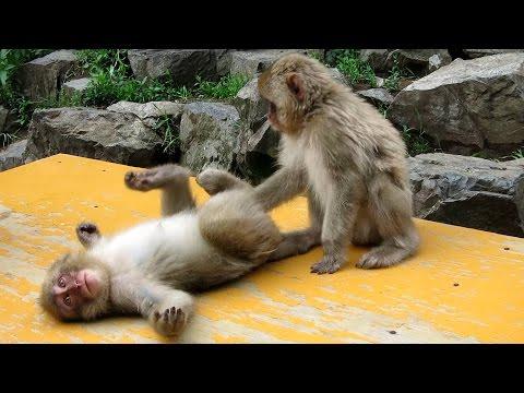Sunday at Monkey Park | Jigokudani Yaen-Koen, Japan