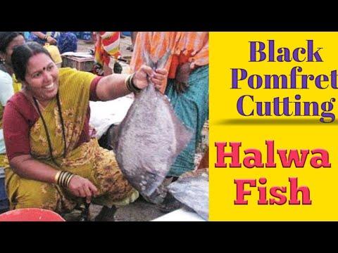 Black Pomfret l हलवा  great fish cutter ( in pune )