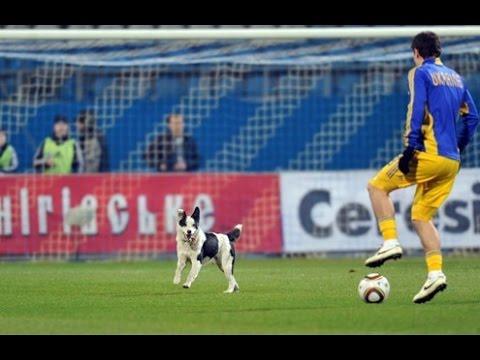 Động vật trên sân bóng đá | Những tình huống hài hước vui nhộn nhất