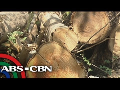 Roadwidening project in Pangasinan needs to cut 2,000 trees