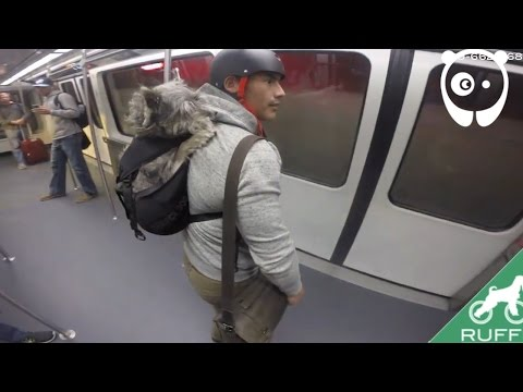 Awesome dog backpack