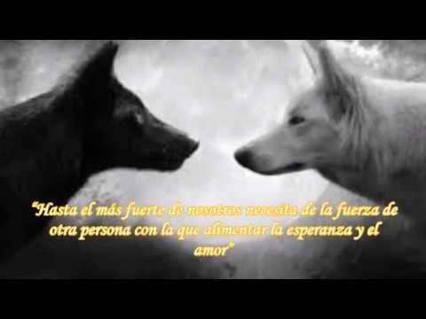 El amor de lobo negro