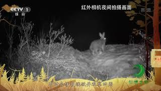 《秘境之眼》 雪兔 20200108| CCTV