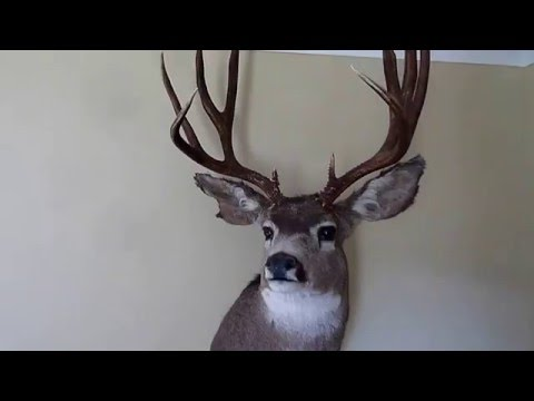 Maybe Worst Taxidermy Ever !