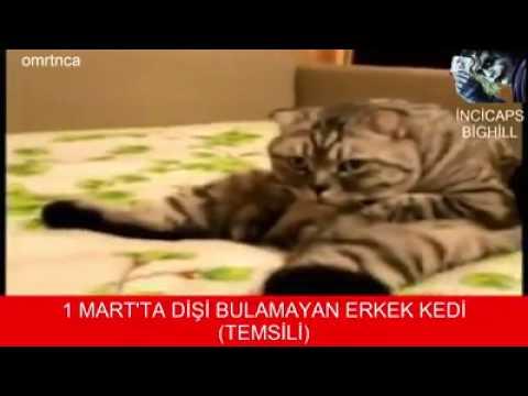1 Martta dişi bulamayan erkek kedi