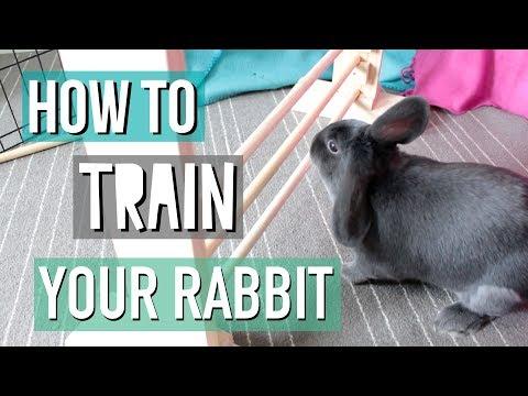 How To Teach Your Rabbit Tricks