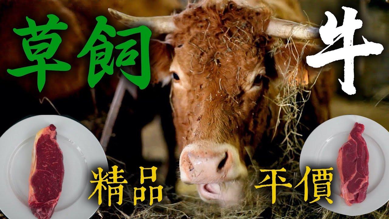 草飼牛比穀飼牛更美味?精品/平價 草飼牛 PK