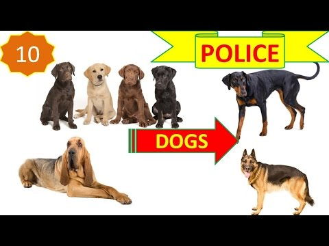 [WorldTopAZ]: Top 10 Best Police Dog Breeds In The World For Security