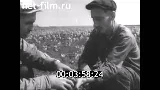 Волга пришла в степь. Об орошении засушливых земель Волгоградской области