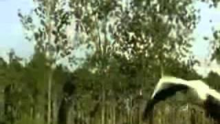VIỆT NAM - HÌNH BÓNG QUÊ XƯA - ca khúc Nguyễn Trọng Khôi -