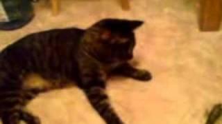 Памяти моему коту посвящается!!!