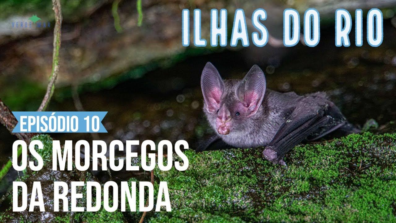 Capturamos morcegos na Ilha Redonda! - Webserie Ilhas do Rio - EP. #10 - Mastofauna terrestre