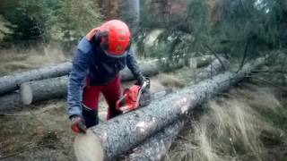 Chainsaw Husqvarna 560 XP - Cutting a tree across the video