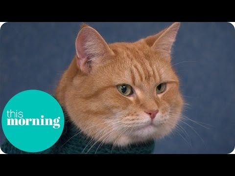 Holly And Ben Meet The Real Street Cat Named Bob | This Morning