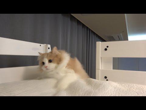 안돼! 밤이 되었더니 난리가 난 고양이들