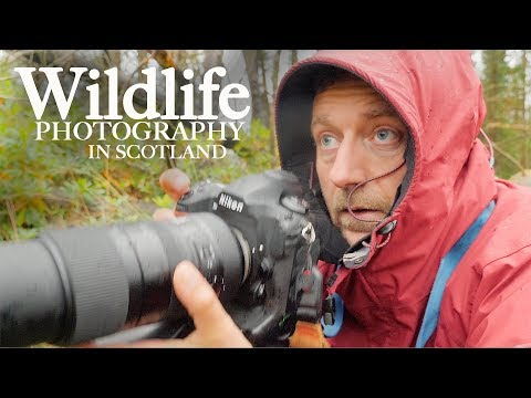 Photographing WILDLIFE And LANDSCAPES In SCOTLAND   With Adam Karnacz From First Man Photography