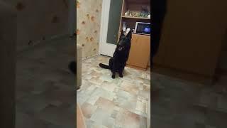 Собака поёт вместе с C.C. Catch восточноевропейская овчарка