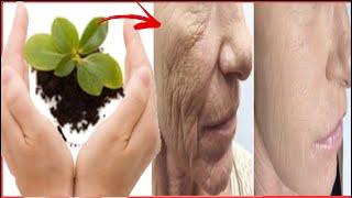 Ces 6 plantes que vous avez chez vous pour rajeunir, lisser et ramener du collagène à votre corps !