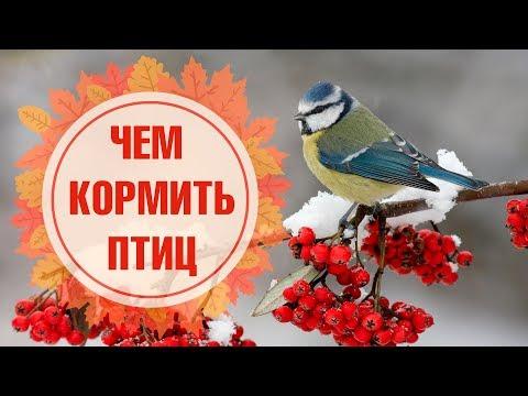 Вопрос: В зиму Вы кормите птиц под своим окном или к этому равнодушны Почему?