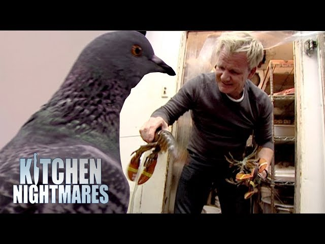 Ramsay Finds A Pigeon and More Dead Lobster in the Kitchen | Kitchen Nightmares