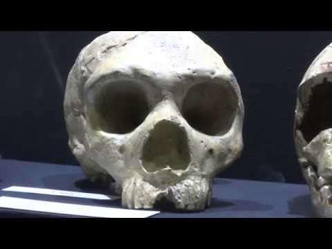 Calpe Conference to commemorate 170th Anniversary of discovery of Gibraltar skull - 12.09.18