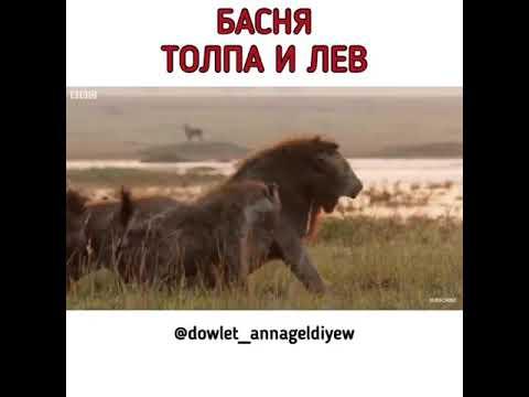 Довлет Аннагельдиев.Толпою гасят даже льва☝️ ••••••••••••••••••••••••••••• #басня #стихиожизни #стих