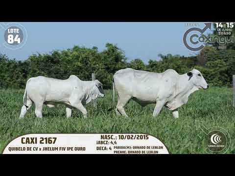 LOTE 84   CAXI 2167