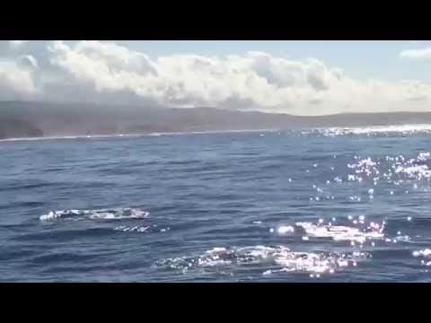 Na Pali Coast Kauai Hawaii snorkel cruise with dolphins sea cliffs