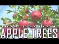 Gambar cover How to Grow Apple Trees from cuttings - Grow any fruit tree EASY