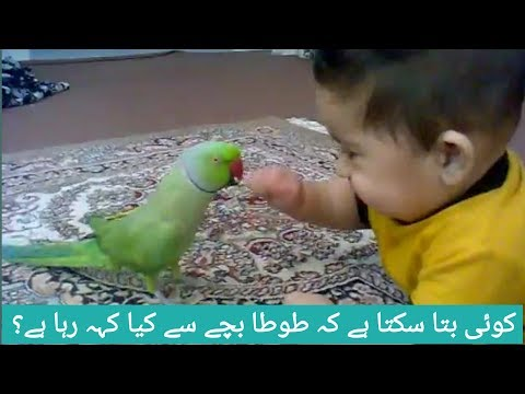 Parrot  Talking Funny|Parrot  Talking To Babies|Beuti Full Parrot Best Conservation With Children