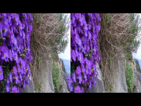 Swiss Spring Flowers 3D