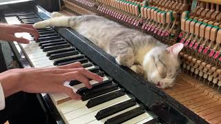 Скачать The Best Lullaby For Cat Meowssage