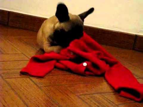 Maia e il Maglione Rosso