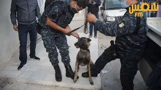 العاصمة: حملة أمنية ومداهمات بإستعمال فرقة الأنياب والحصيلة عديد الإيقافات
