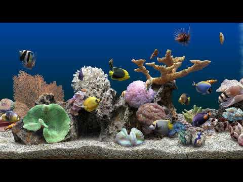 Marine Aquarium 3 - 2 hours (4K)