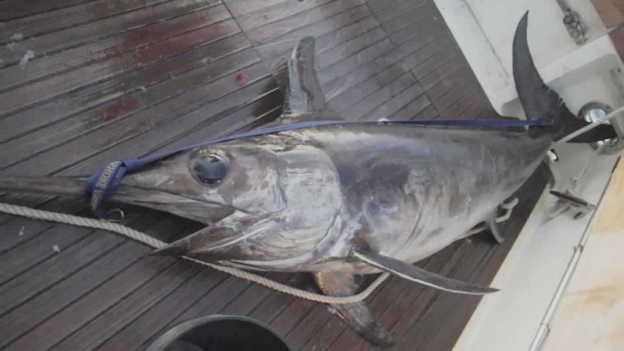 Pez Espada Electrico 120kg Swordfish Electric Youtube