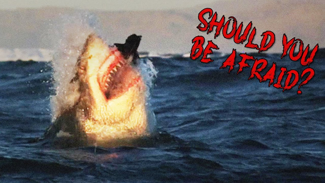 Should You Be Afraid of Sharks?