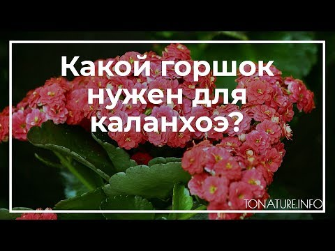 Какой горшок нужен для каланхоэ? | toNature.Info