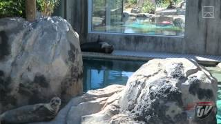 Utah Zoo And Dog Park - #458 -  07/31/15