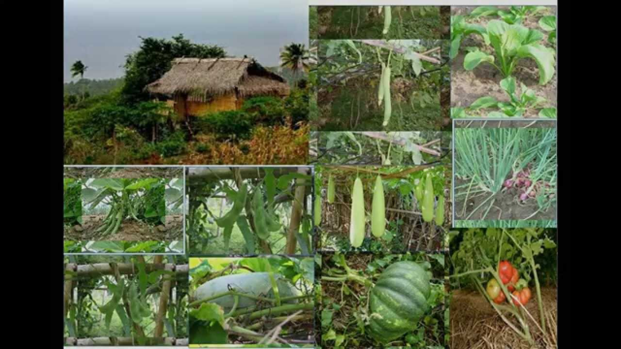 Bahay Kubo Vegetable Garden Garden Ftempo