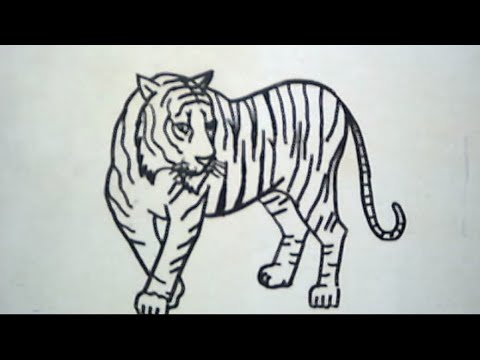 Cara Menggambar Harimau How To Draw A Tiger Youtube