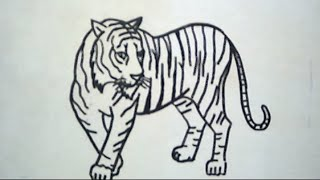 Cara Menggambar Harimau (How to Draw a Tiger)