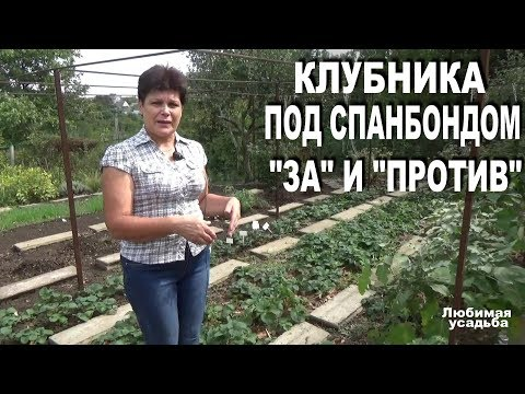 Как рыхлить клубнику под агроволокном