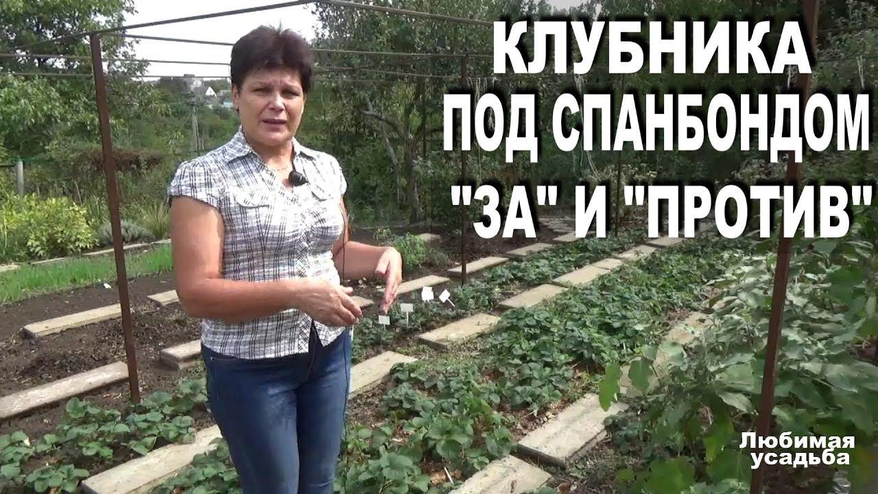Выращивание клубники на  спанбонде. Все за и против. Из личного опыта.