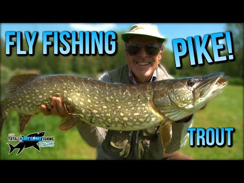 Graeme catches Huge Pike and Chunky Trout on the Fly | TAFishing