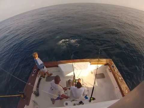 Fishing In Charleston, SC - Deep Sea Offshore Charter Boats